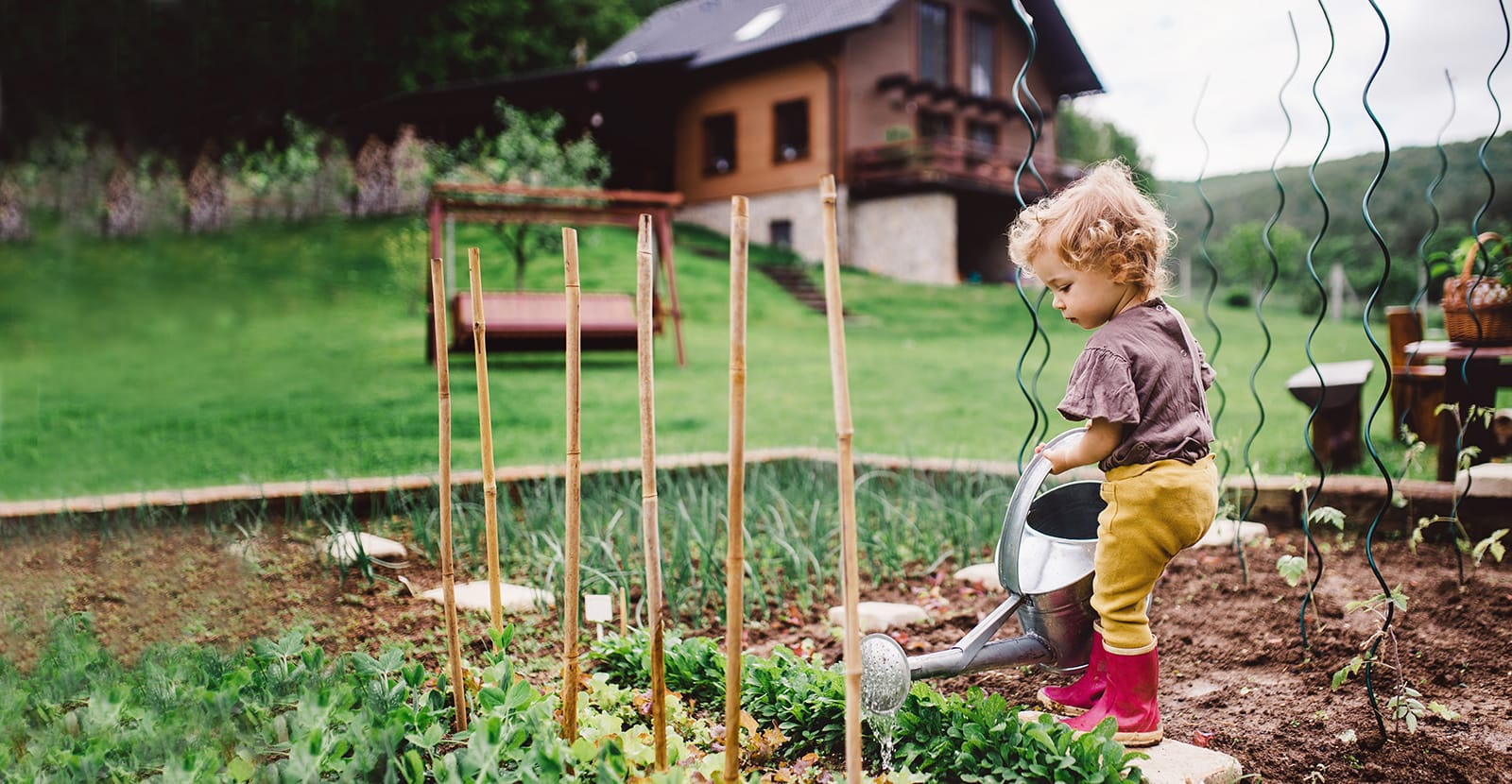 A child holds a metal watering can with both hands and waters a vegetable patch.