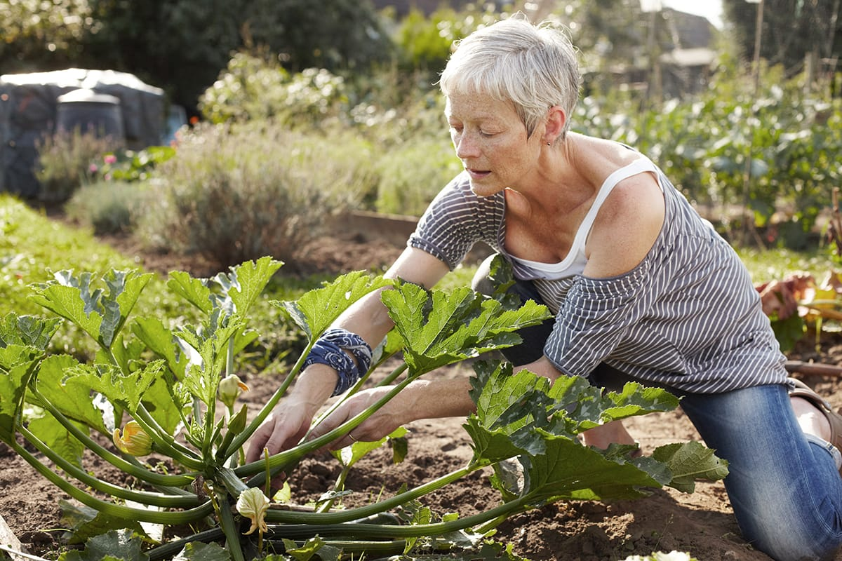 An older woman works in her vegetable plot.