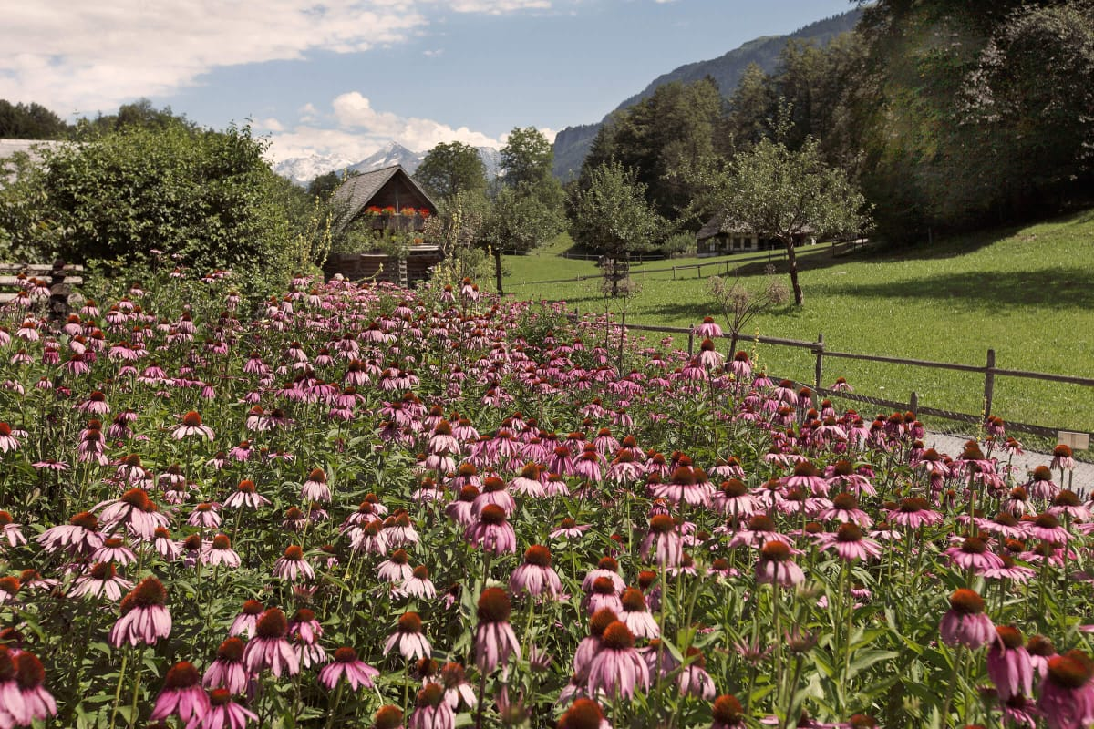 Una casa in mezzo a un prato verde in una vallata racchiusa tra le montagne, in primo piano un campo di fiori.