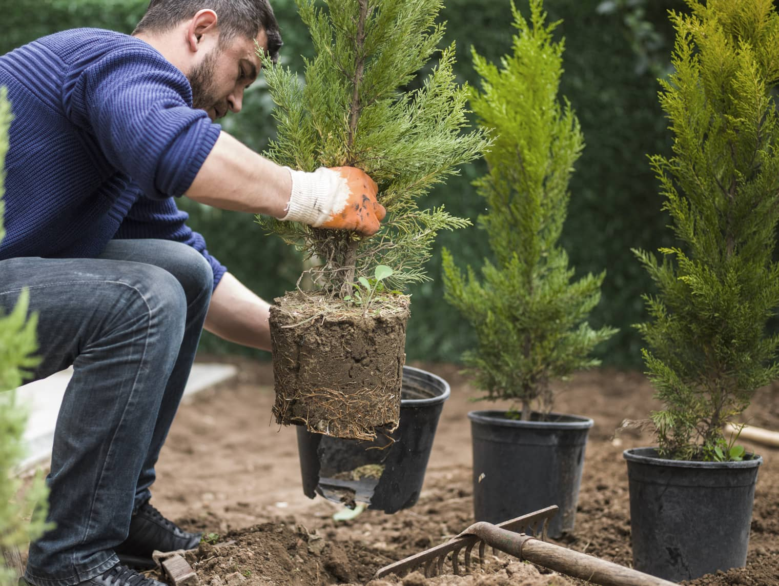Close-up of a person planting a small tree; more trees can be seen in the background.